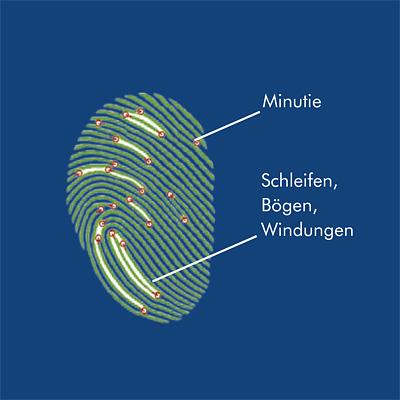 Wittkopp Fingerprint